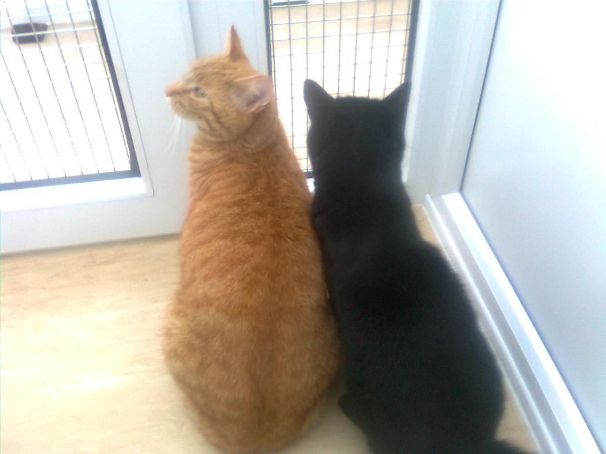 Cinder and waffle bird watching